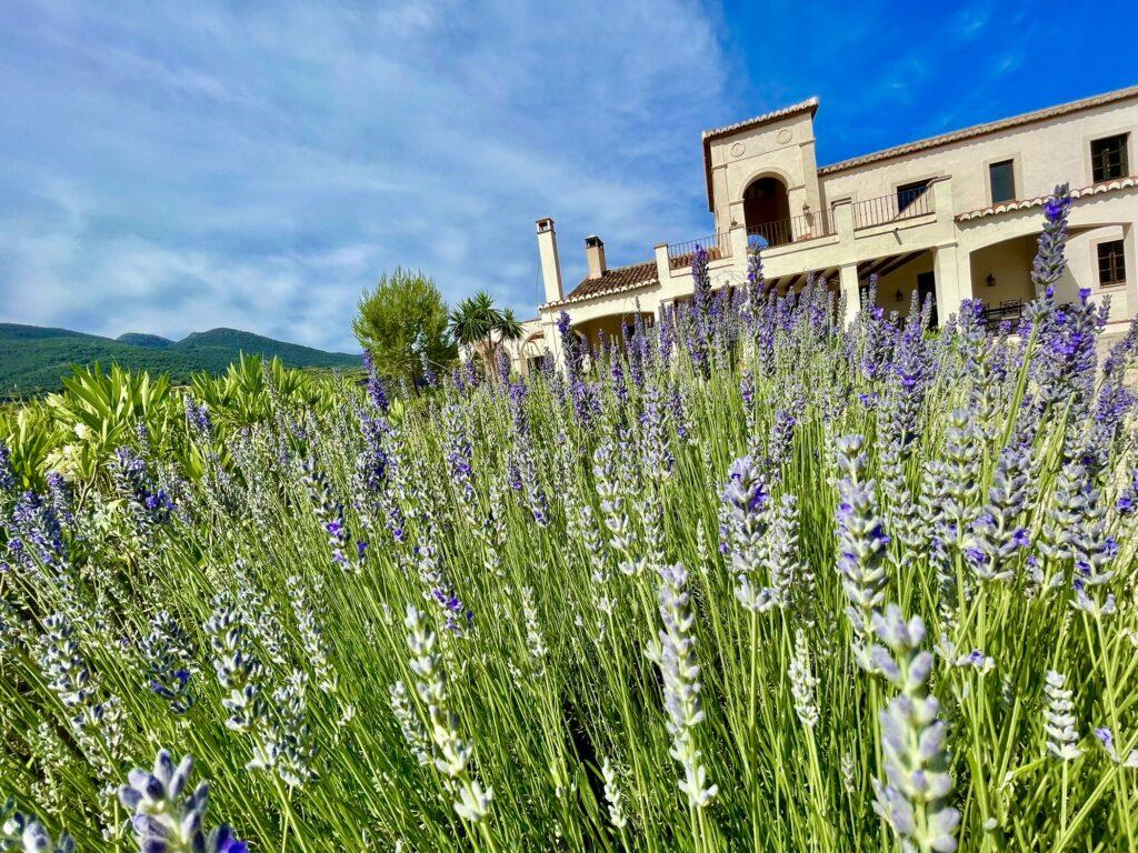 Gardens of La Esperanza Granada